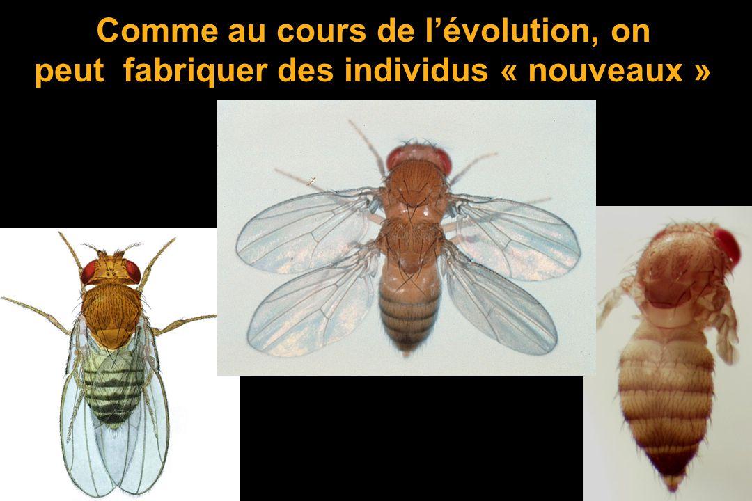 Comme au cours de l'évolution, on peut fabriquer des individus « nouveaux »