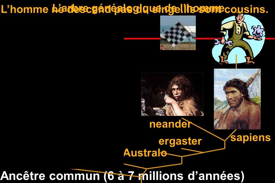 Ancêtre commun (6 à 7 millions d'années)