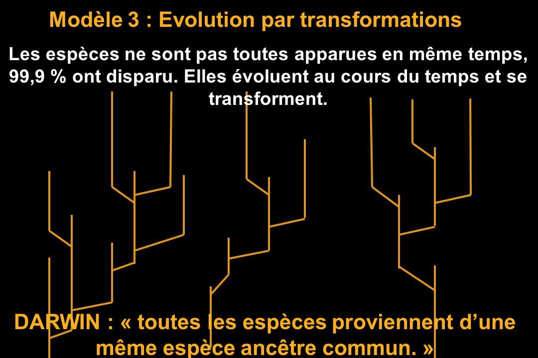 Modèle 3 : Evolution par transformations