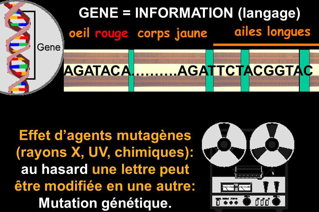 Effet d'agents mutagènes (rayons X, UV, chimiques):