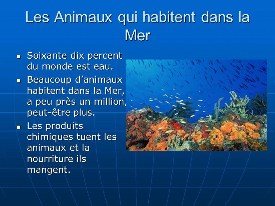 Les Animaux qui habitent dans la Mer