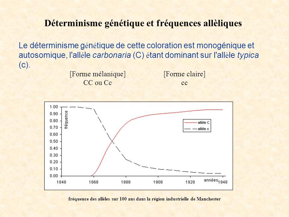 Déterminisme génétique et fréquences allèliques