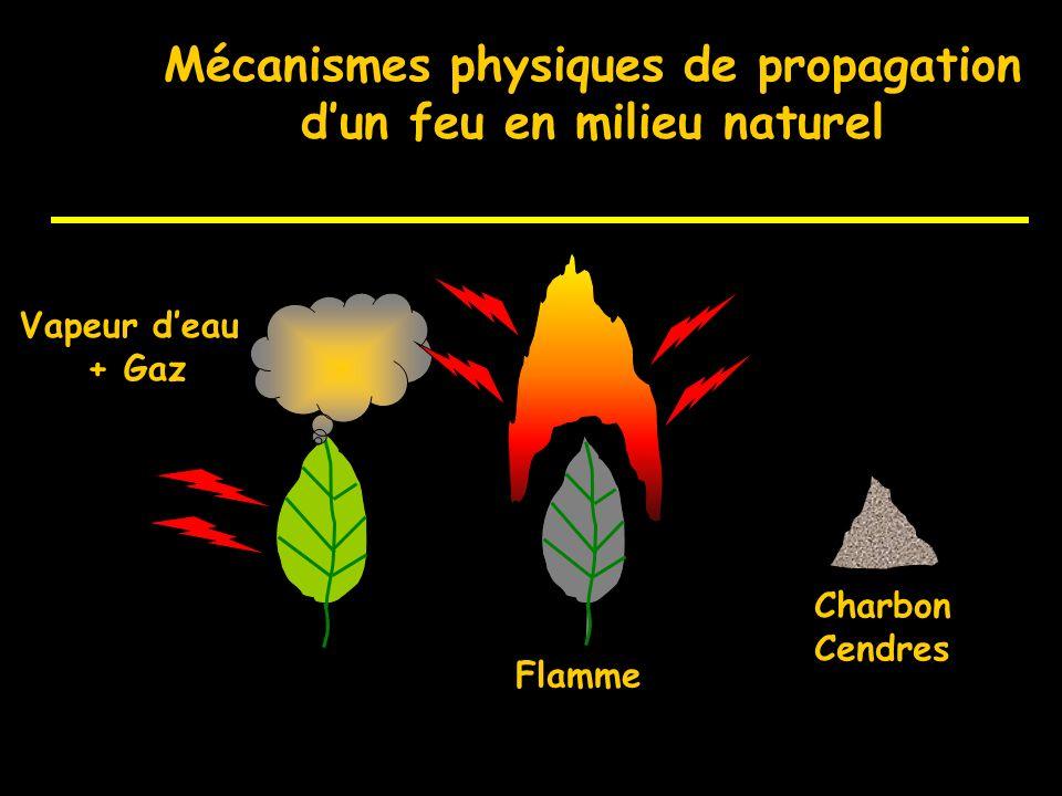 Mécanismes physiques de propagation d'un feu en milieu naturel