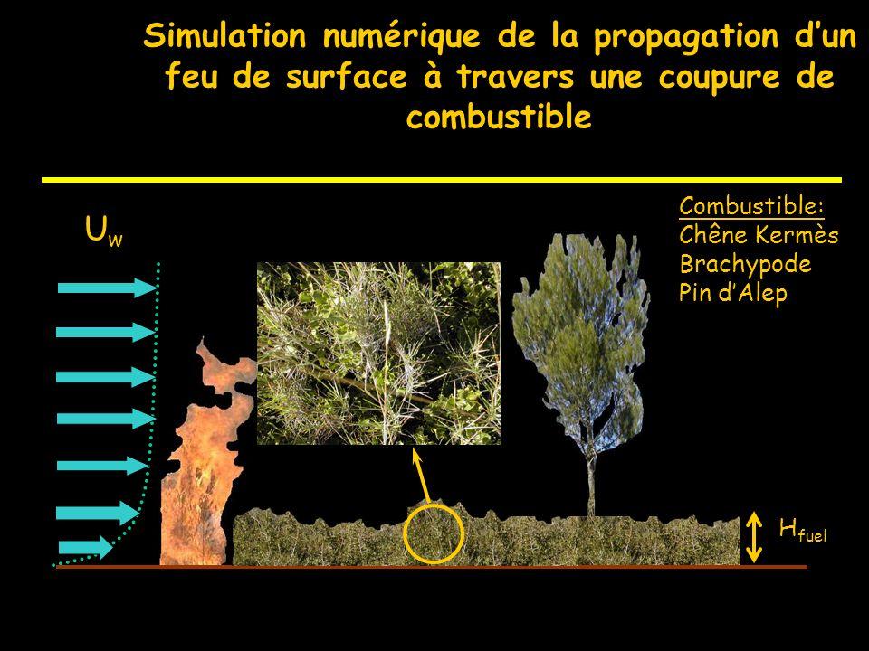 Simulation numérique de la propagation d'un feu de surface à travers une coupure de combustible