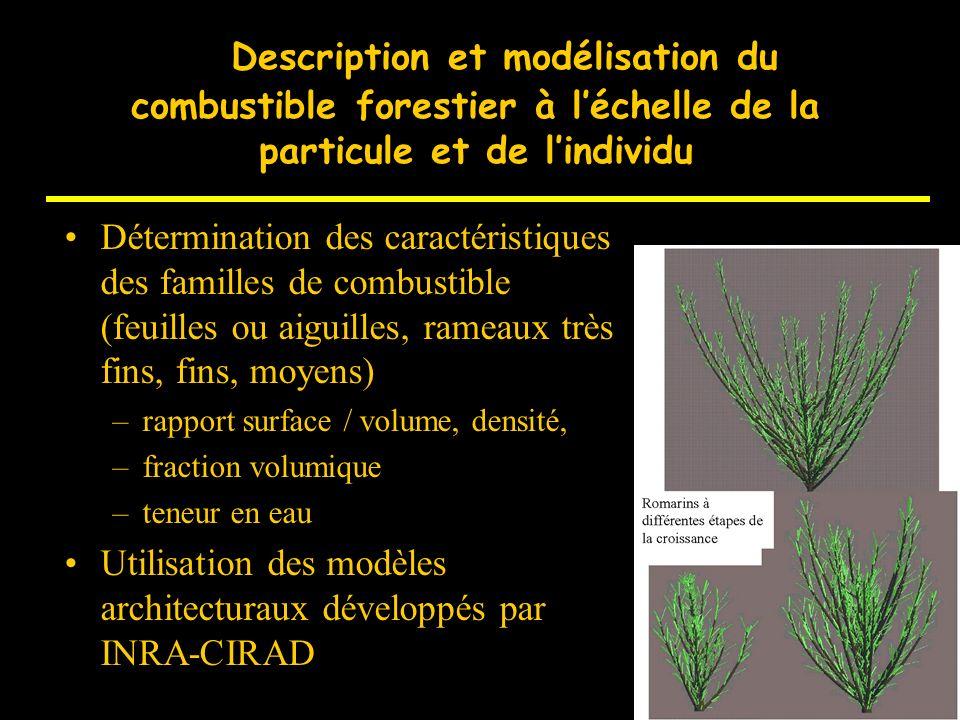 D Description et modélisation du combustible forestier à l'échelle de la particule et de l'individu