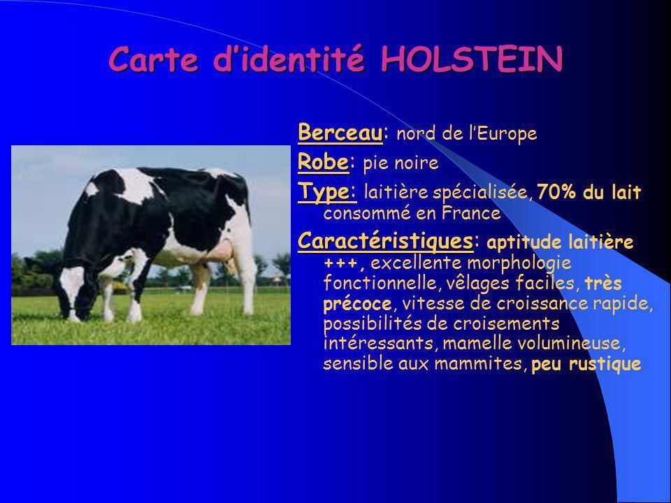 Carte d'identité HOLSTEIN