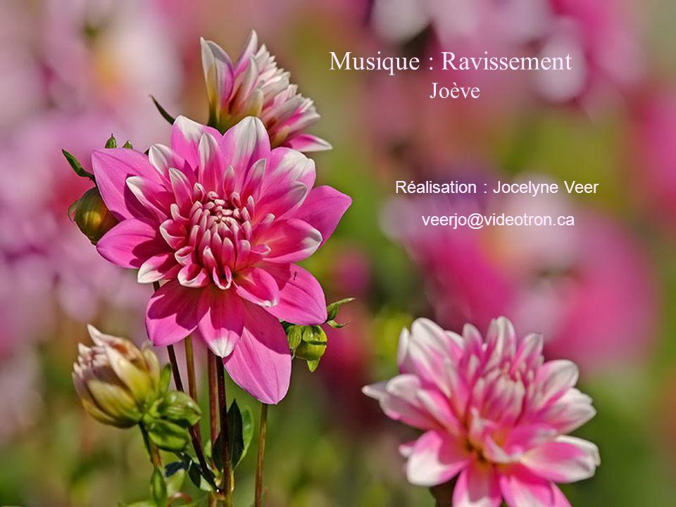 Musique : Ravissement Joève Réalisation : Jocelyne Veer