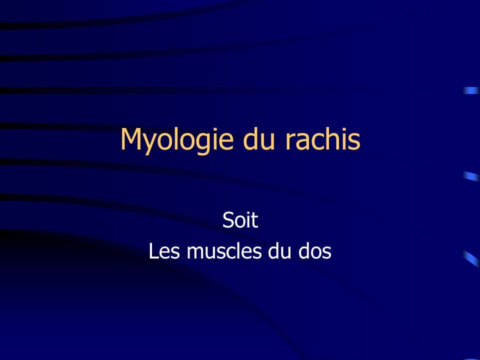 Myologie du rachis Soit Les muscles du dos