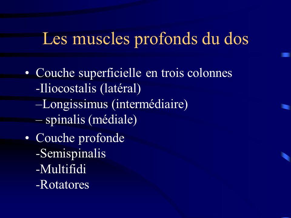 Les muscles profonds du dos