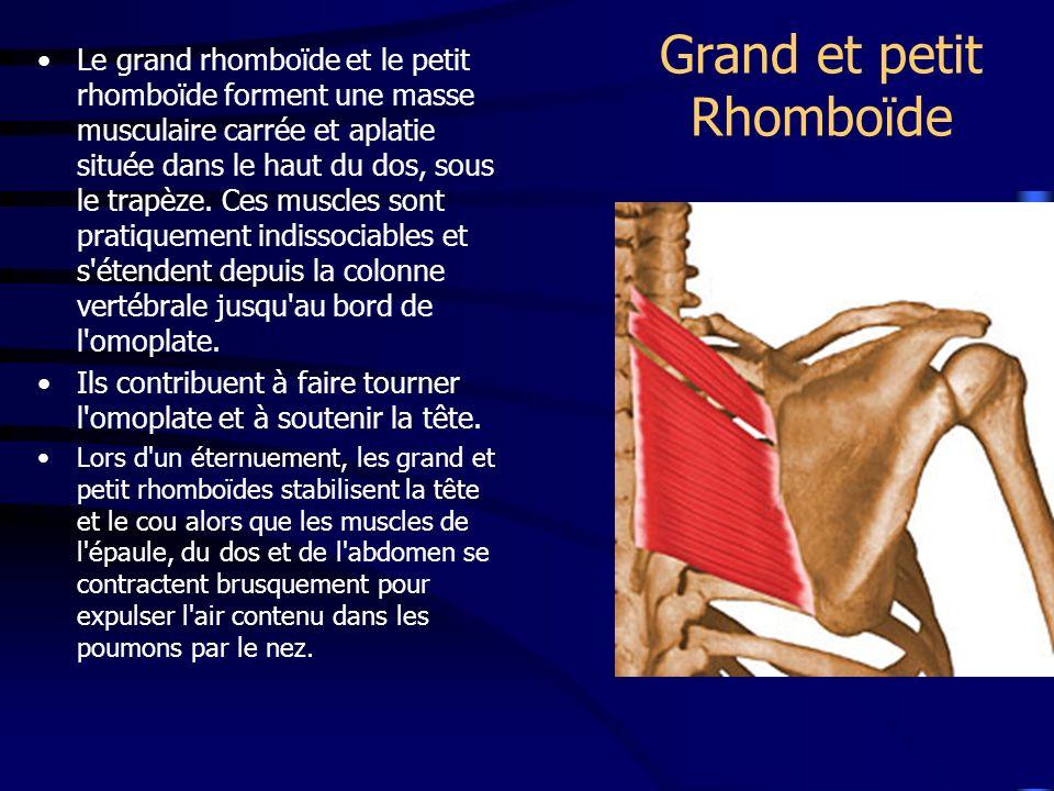 Grand et petit Rhomboïde