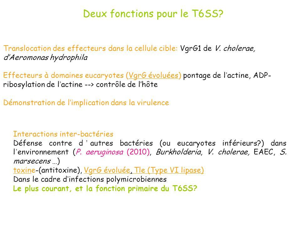 Deux fonctions pour le T6SS