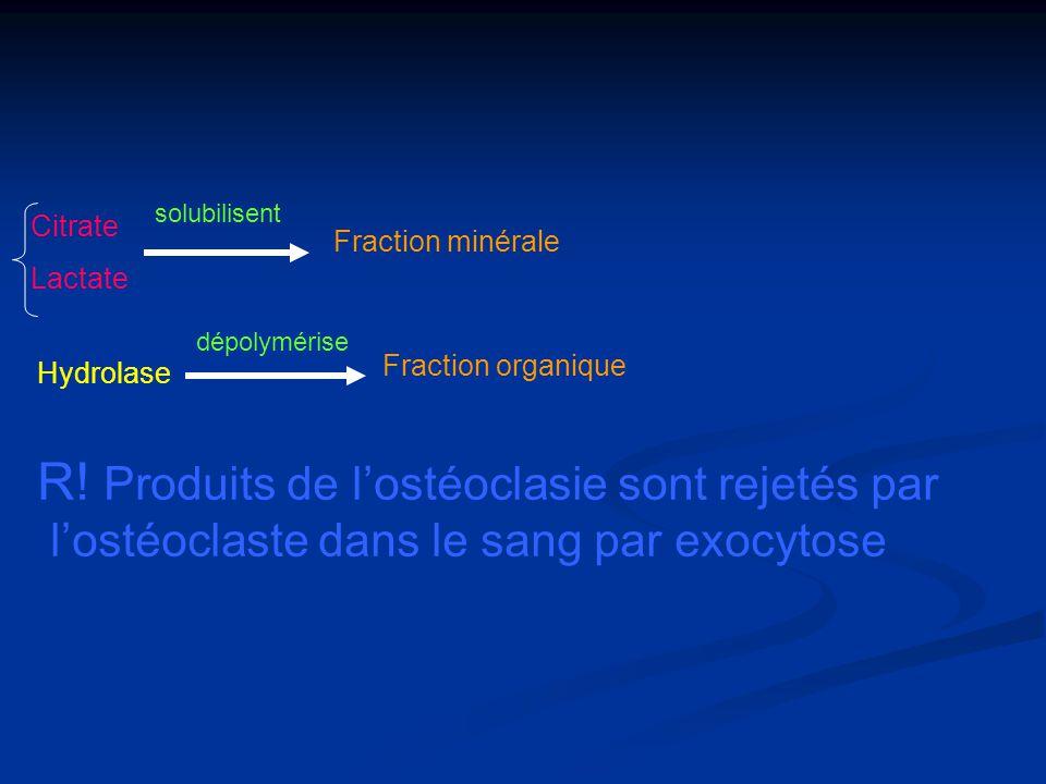 R! Produits de l'ostéoclasie sont rejetés par
