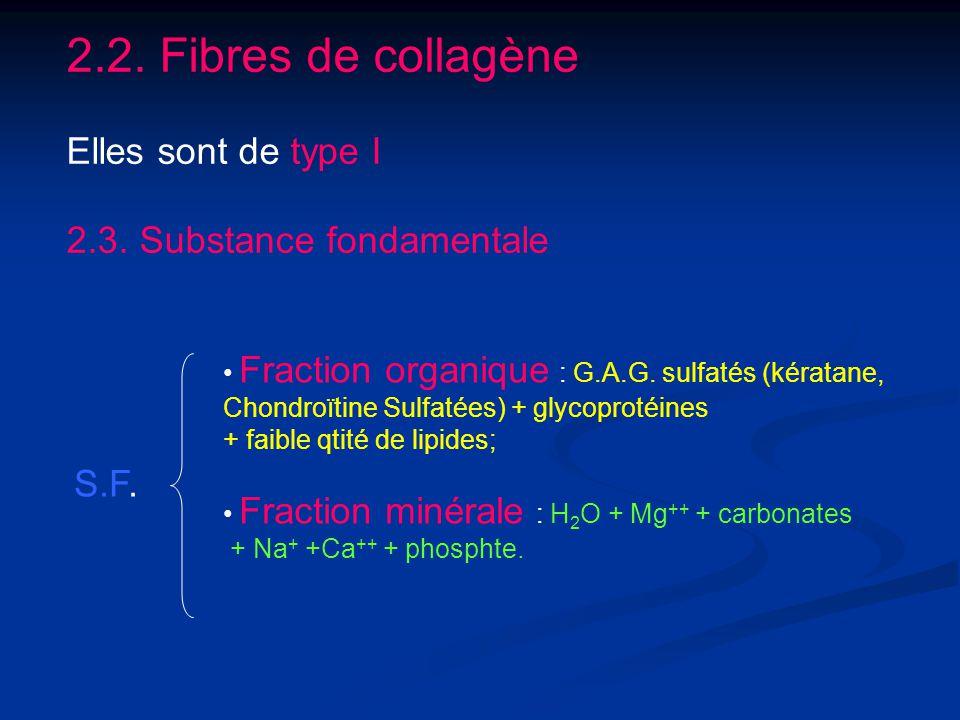 2.2. Fibres de collagène Elles sont de type I