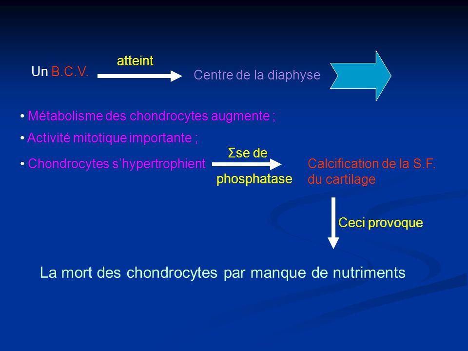 La mort des chondrocytes par manque de nutriments