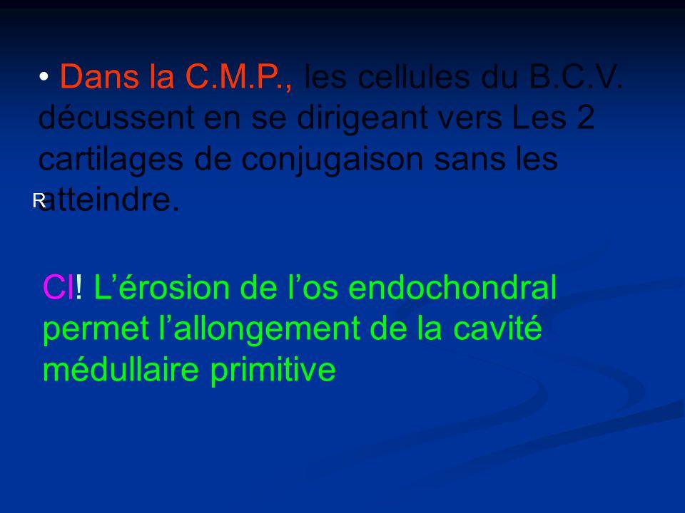 Dans la C. M. P. , les cellules du B. C. V