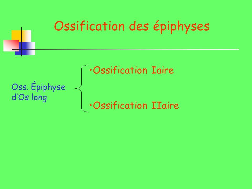 Ossification des épiphyses