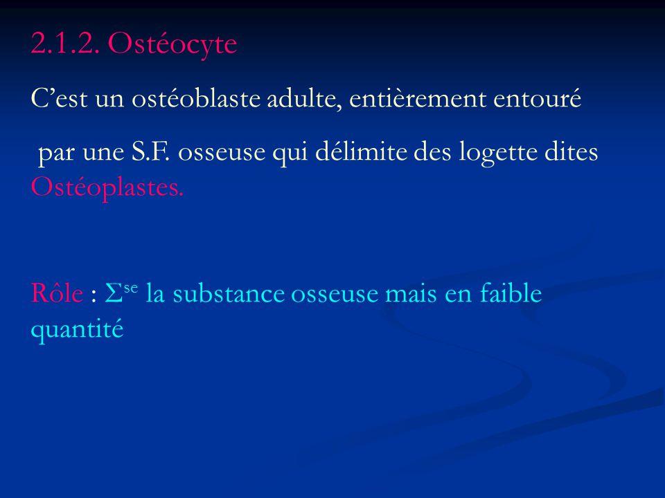 2.1.2. Ostéocyte C'est un ostéoblaste adulte, entièrement entouré