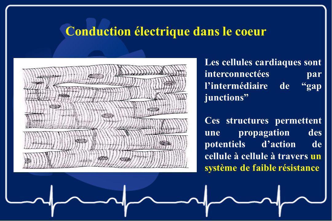 Conduction électrique dans le coeur