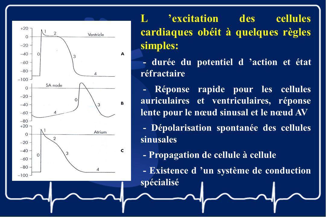 L 'excitation des cellules cardiaques obéit à quelques règles simples: