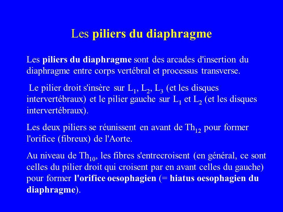 Les piliers du diaphragme