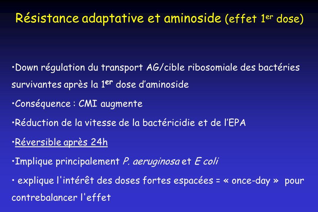 Résistance adaptative et aminoside (effet 1er dose)