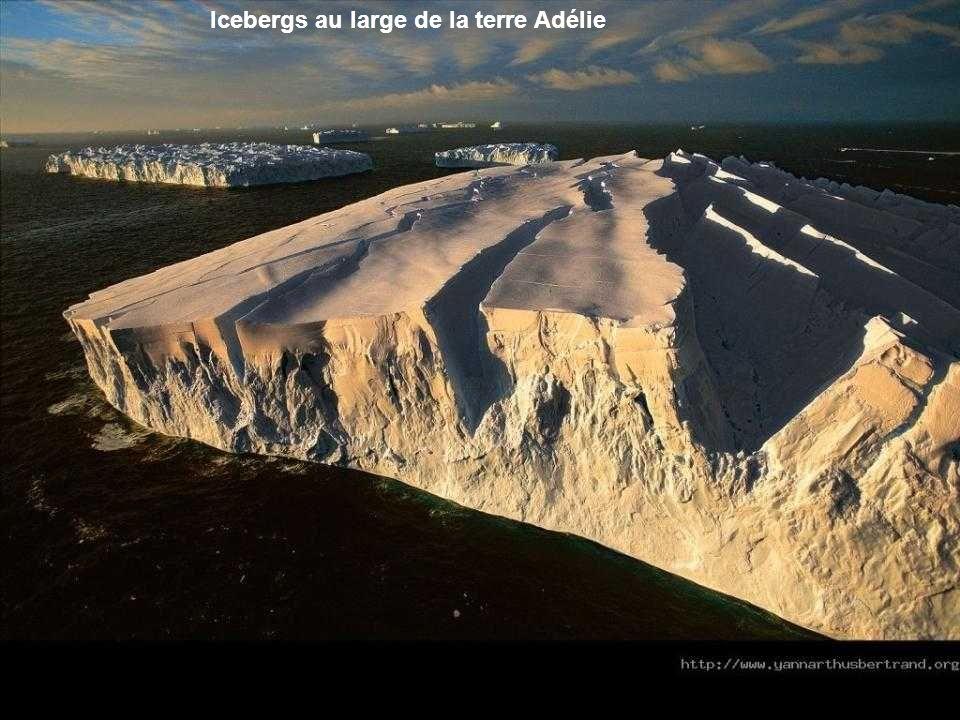 Icebergs au large de la terre Adélie