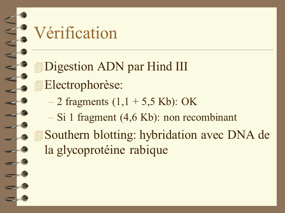 Vérification Digestion ADN par Hind III Electrophorèse: