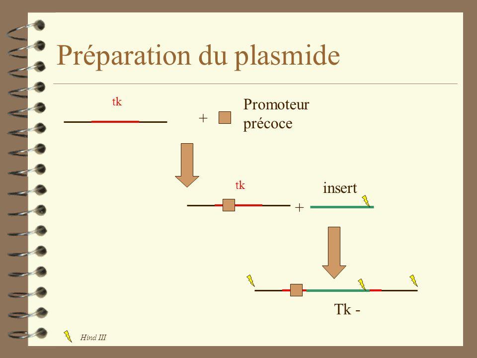 Préparation du plasmide