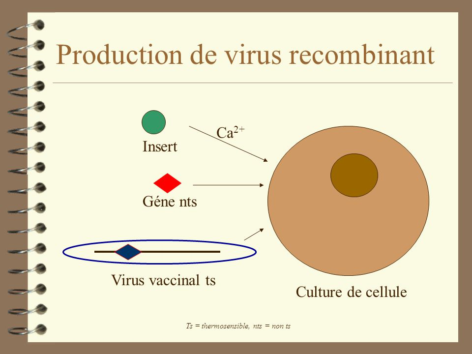 Production de virus recombinant