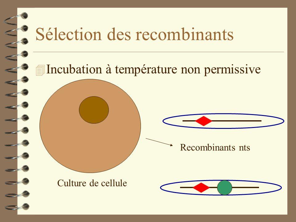 Sélection des recombinants