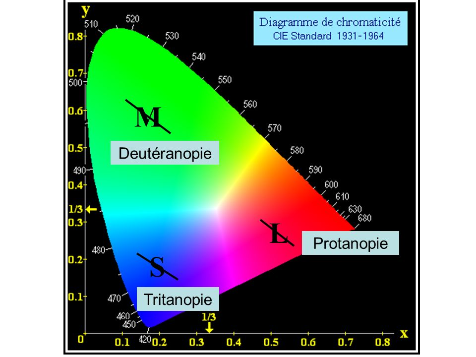 M L S Deutéranopie Protanopie Tritanopie