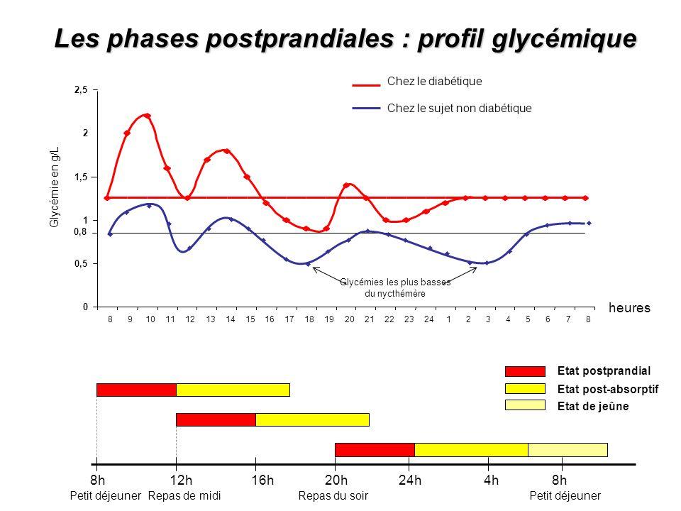 Les phases postprandiales : profil glycémique