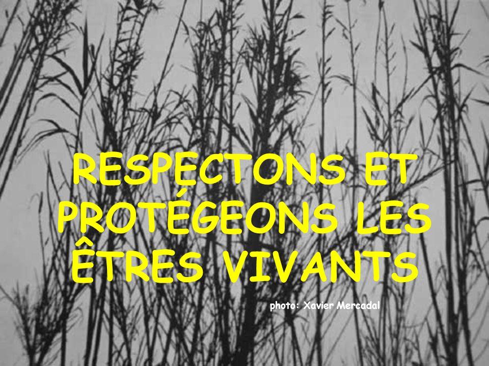 RESPECTONS ET PROTÉGEONS LES ÊTRES VIVANTS