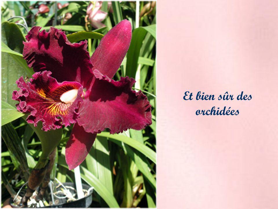 Et bien sûr des orchidées