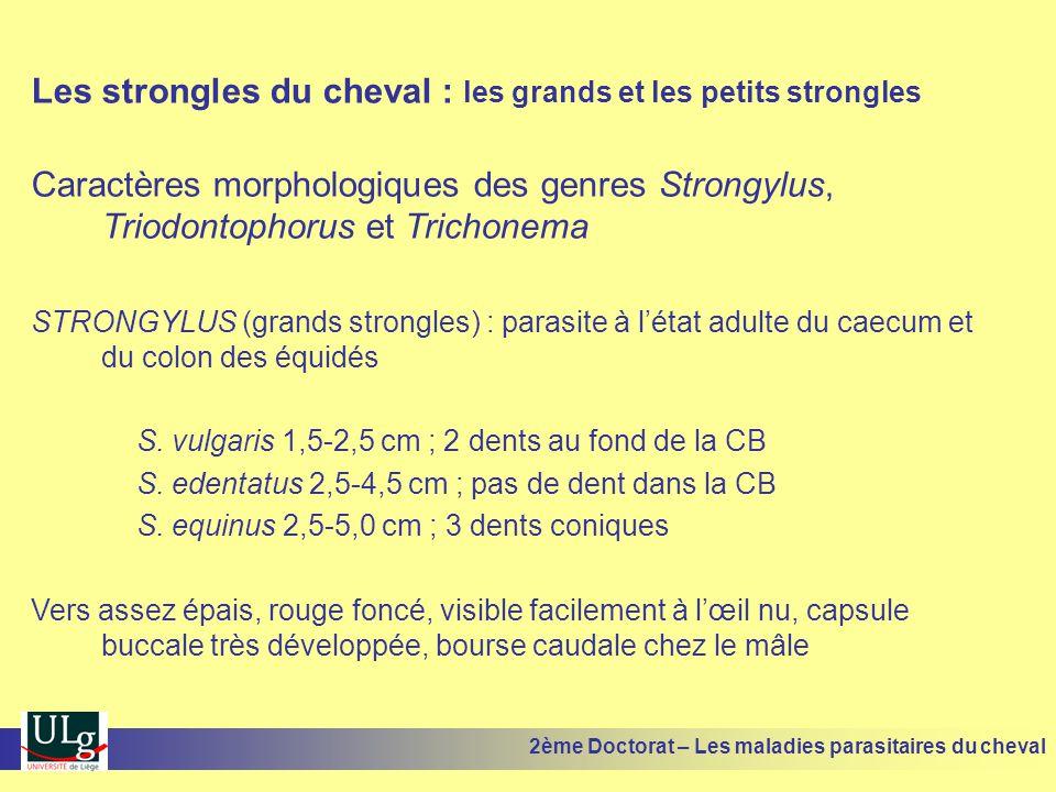 Les strongles du cheval : les grands et les petits strongles