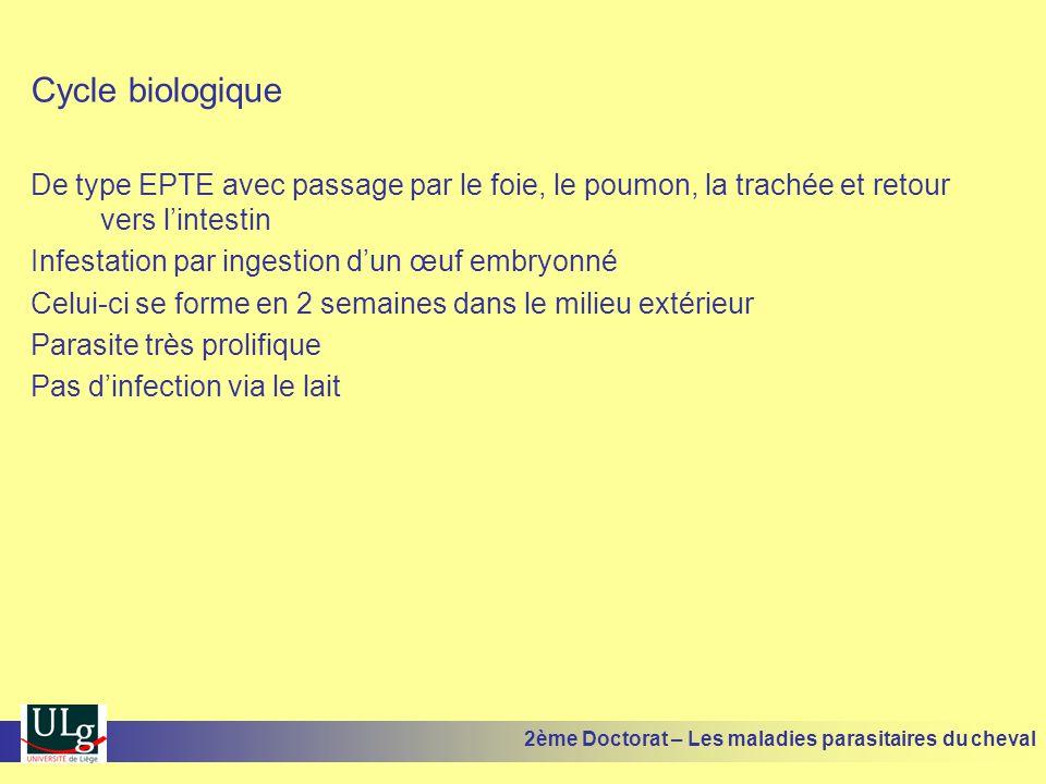 Cycle biologique De type EPTE avec passage par le foie, le poumon, la trachée et retour vers l'intestin.