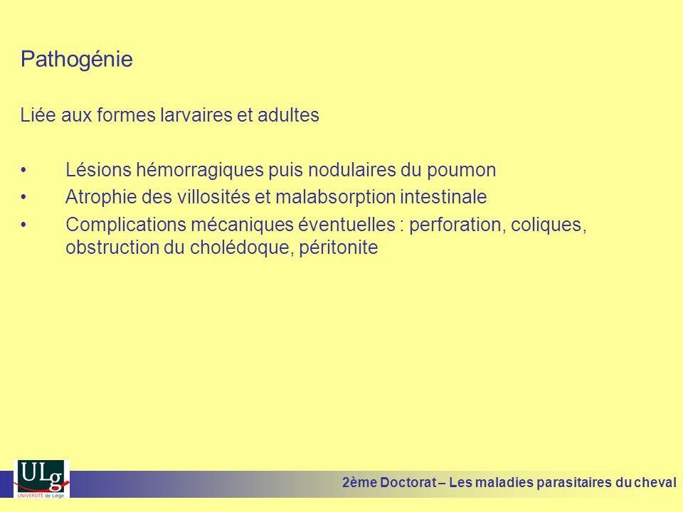 Pathogénie Liée aux formes larvaires et adultes