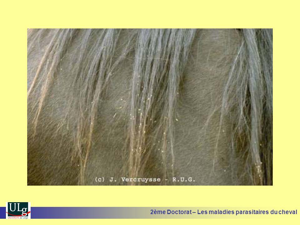 2ème Doctorat – Les maladies parasitaires du cheval