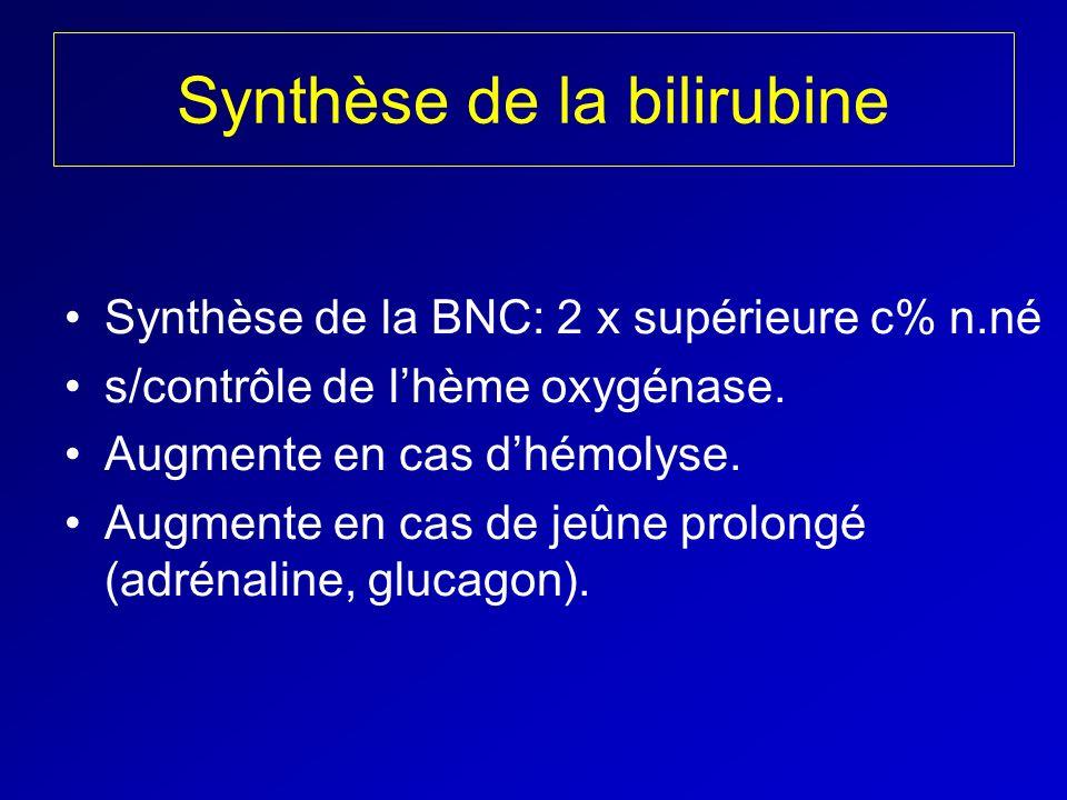 Synthèse de la bilirubine