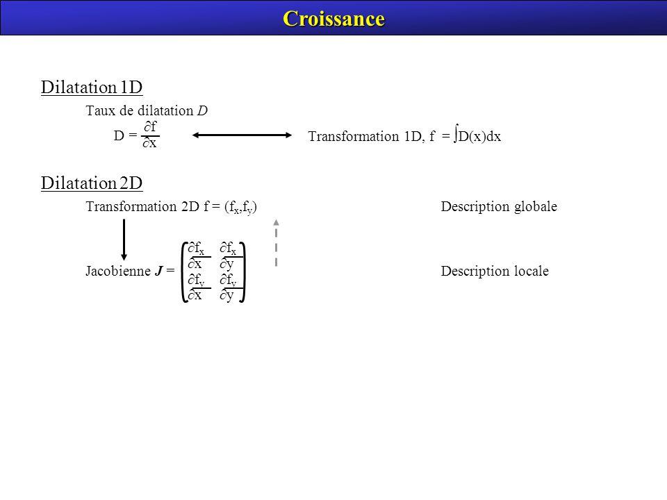 Croissance Dilatation 1D Dilatation 2D — Taux de dilatation D