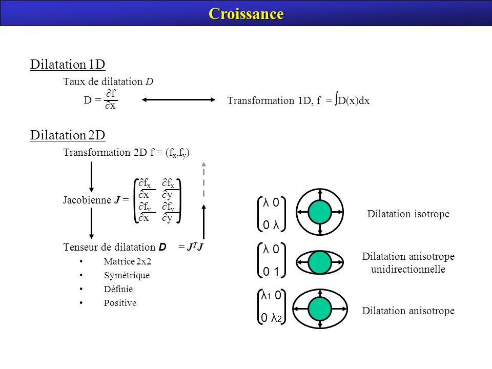 Croissance Dilatation 1D Dilatation 2D — λ 0 0 λ λ 0 0 1 λ1 0 0 λ2