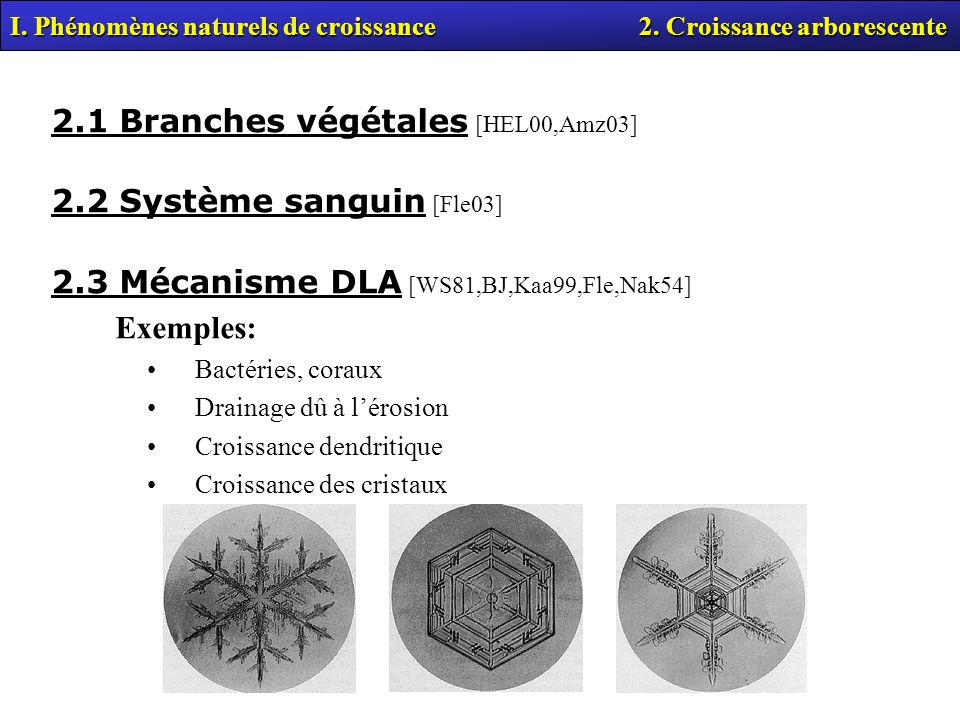 I. Phénomènes naturels de croissance 2. Croissance arborescente