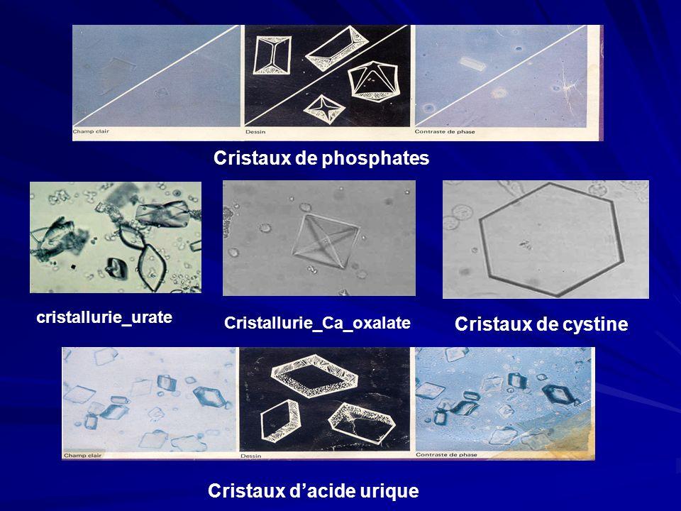 Cristaux de phosphates