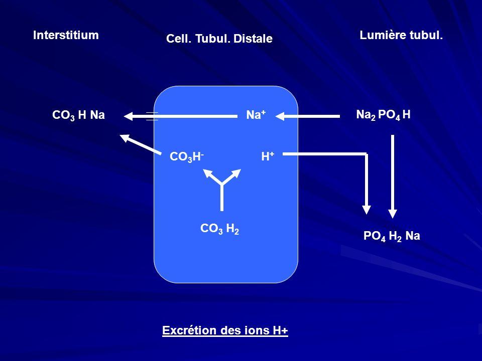 InterstitiumLumière tubul. Cell. Tubul. Distale. CO3 H Na. Na+ Na2 PO4 H. CO3H- H+ CO3 H2. PO4 H2 Na.