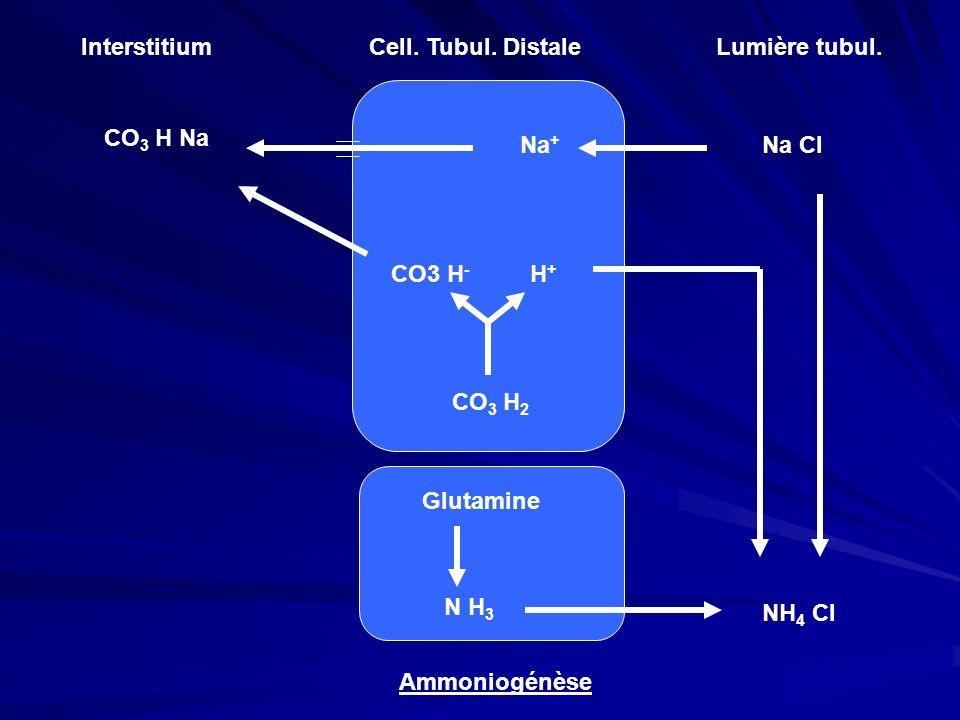InterstitiumCell. Tubul. Distale. Lumière tubul. CO3 H Na. Na+ Na Cl. CO3 H- H+ CO3 H2. Glutamine.