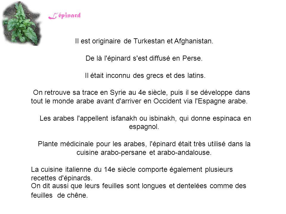 Il est originaire de Turkestan et Afghanistan.
