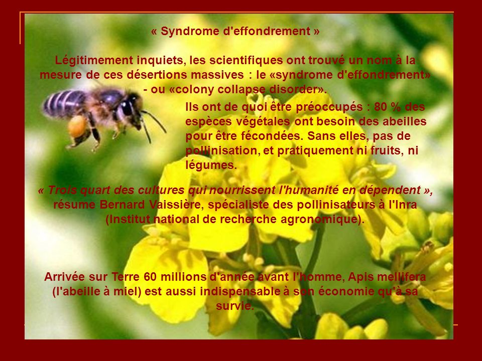 « Syndrome d effondrement »