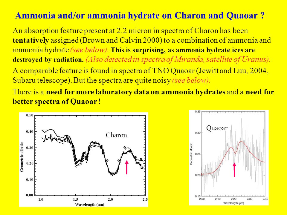 Ammonia and/or ammonia hydrate on Charon and Quaoar