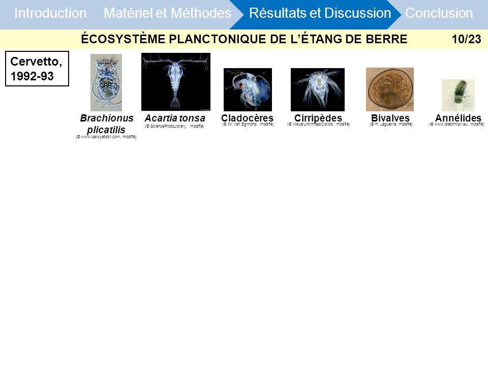 ÉCOSYSTÈME PLANCTONIQUE DE L'ÉTANG DE BERRE