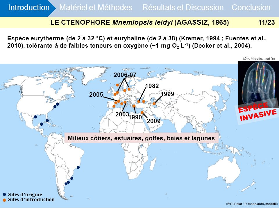 LE CTENOPHORE Mnemiopsis leidyi (AGASSIZ, 1865)